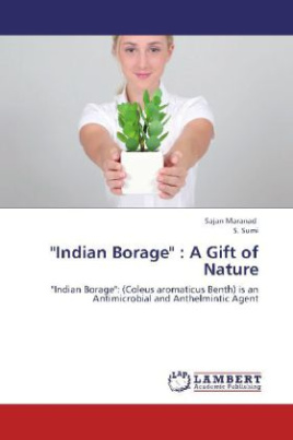 """Indian Borage"" : A Gift of Nature"