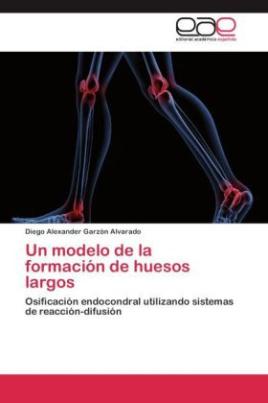 Un modelo de la formación de huesos largos