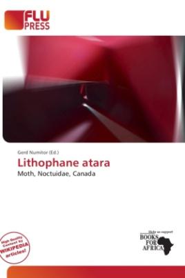 Lithophane atara
