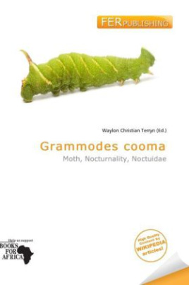 Grammodes cooma